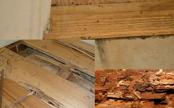 Hình ảnh sàn gỗ thịt bị mối một
